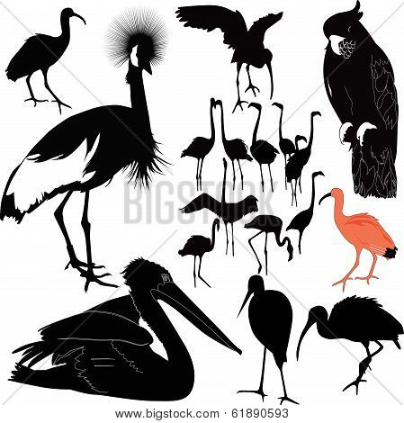 collection birds nature
