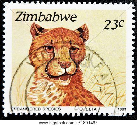 stamp printed in Zimbabwe shows a cheetah