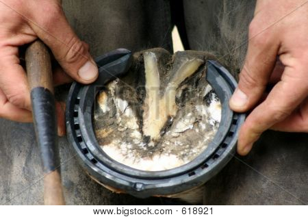Picture or Photo of Skilled farrier carefully sizes up the horse shoe onto the hoof*** Note, slight blurriness, best at smaller sizes.