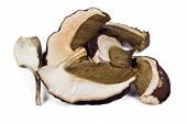 foto of porcini  - Dried slices of porcini mushrooms on a white background - JPG