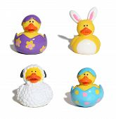 picture of easter_break  - Easter themed ducks - JPG