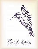 foto of colibri  - Vintage retro beautiful hummingbird vector eps 8 - JPG