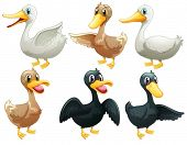 image of fowl  - Illustration of the ducks and geese on a white background - JPG