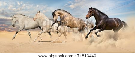 Group of horse run gallop