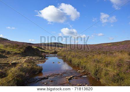 Moorland Stream