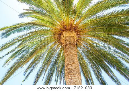 Under the palm travel background.