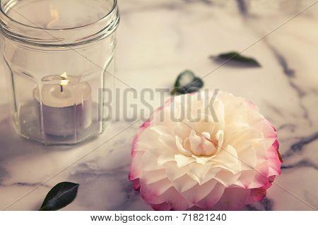 Vintage Feel Camellia Flower And Jar Candle