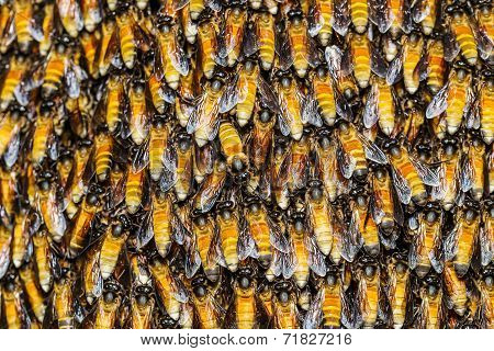 Texture Of Bee Worker Holding Together