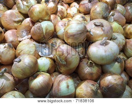 Fresh Onion  Background