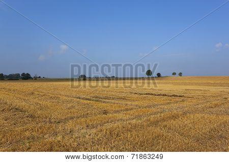 Golden Stubble Under Blue Sky