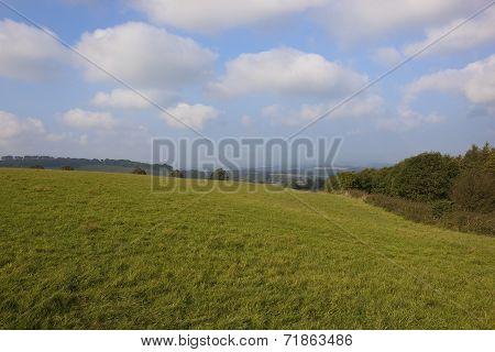 Upland Meadows