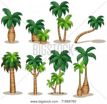 Illustraion of a set of palm tree