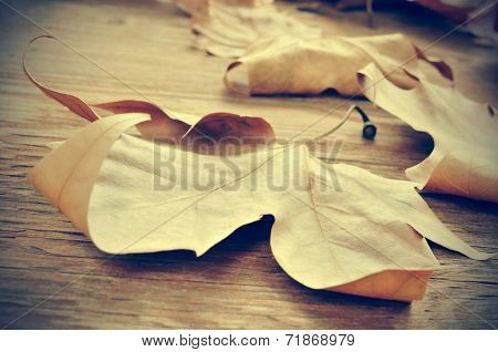 some dried leaves in autumn on a weathered wooden background with a retro effect