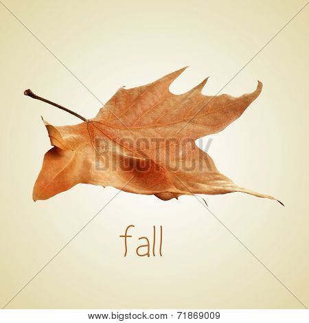 the word fall and a dried leaf on a beige background with a retro effect