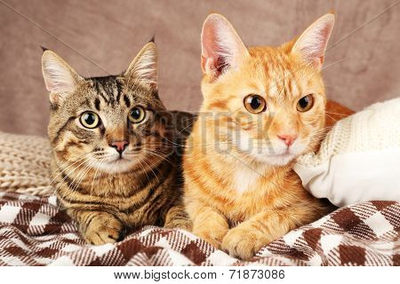Two cats on blanket on brown wall background