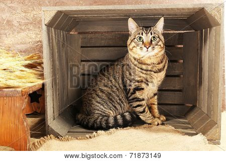 Grey cat in wooden box