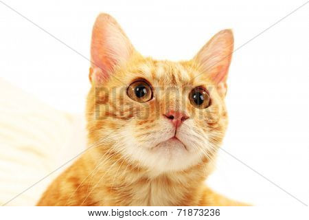 Red cat on fabric background