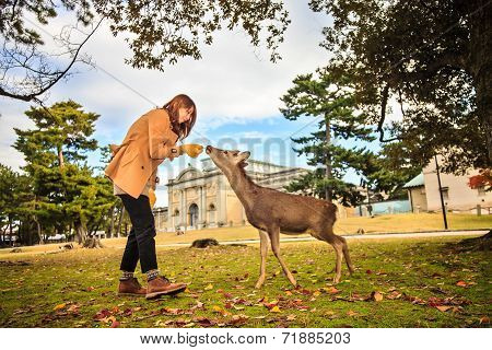 Nara Deer At Fall, Japan
