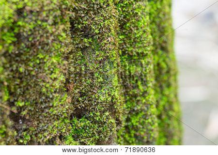 Moss On Concrete Column
