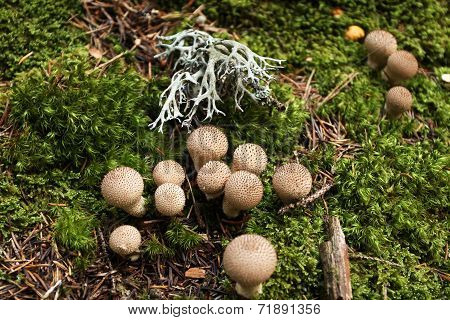 Wild mushrooms In The Forest