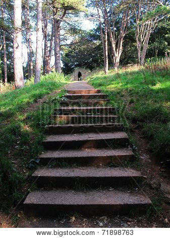 Forest Pathway Steps