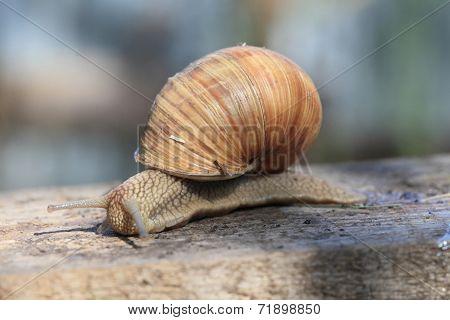 Snail On A Tree.