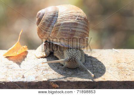 Snail Fall.