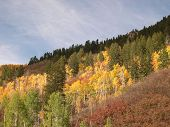 Aspens On Independence Pass