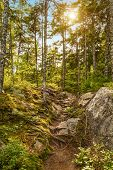 stock photo of acadian  - Moose Horn Trail Path  - JPG
