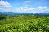 foto of mountain chain  - Impressive landscape at Dalat Vietnam in sunny day amazing cloudy sky chain of mountain far away tea tree in row line beautiful tea plantation wonderful country view for Da Lat travel - JPG