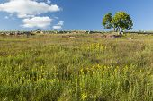 picture of tall grass  - A tree on a hill with tall grass - JPG