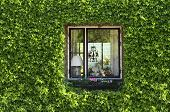 foto of ivy vine  - Ivy window. A lot of green around the window.
