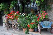 stock photo of planters  - Flowers in the carts and planters in the city of Veliko Tarnovo in Bulgaria - JPG