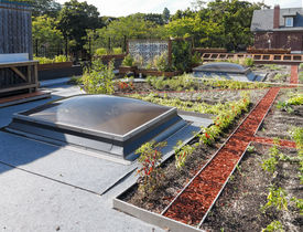 picture of photosynthesis  - Rooftop garden in urban setting under blue sky - JPG
