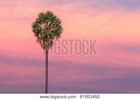 Palm tree on dramatic sunset background