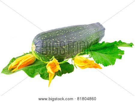 Black  Vegetable Marrow On White Background.