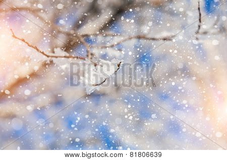 Snow Covered Tree And Snowfall