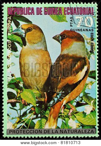 Equatorial Guinea  - Circa 1980: A Stamp Printed In Equatorial Guinea Shows Forest Bird , Circa 1980