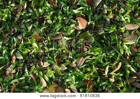 Top View Of Grass And Leaves