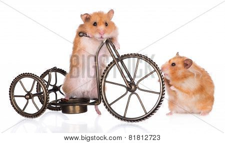 two hamsters and a bicycle
