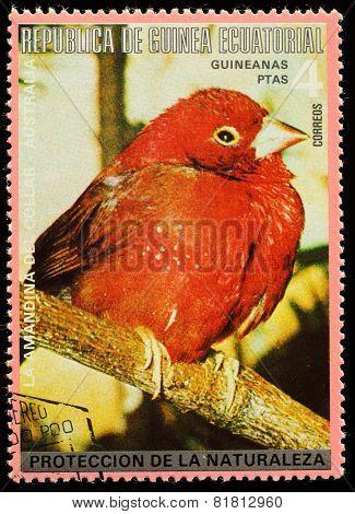 Equatorial Guinea  - Circa 1980: A Stamp Printed In Equatorial Guinea Shows Tropical Bird , Circa 19