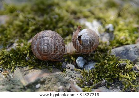 Background with spring snail shells