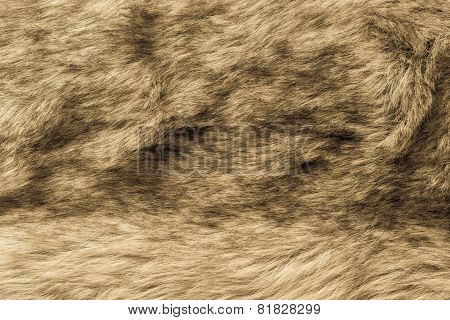 Abstract Texture Of Old Fur Fabric