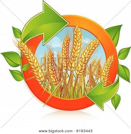 Circle with ripe wheat