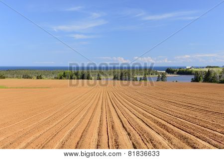 Plowed Field on Prince Edward Island