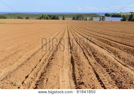 Plowed Field in Spring with Views of Ocean