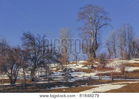 Leafless Trees Landscape