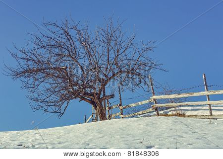 Leafless Tree And Rustic Fence