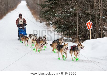 Beargrease 2015 Marathon Denis Tremblay On Trail