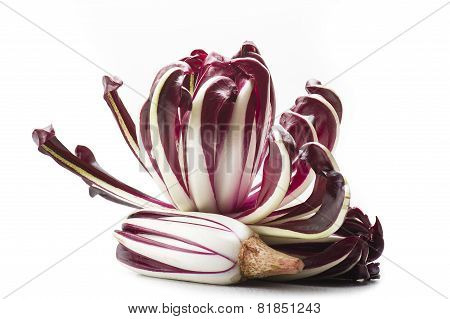 red italian radicchio chicory